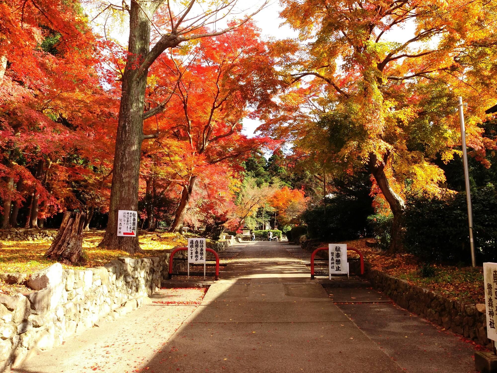 【2017京都紅葉】鷺森神社1
