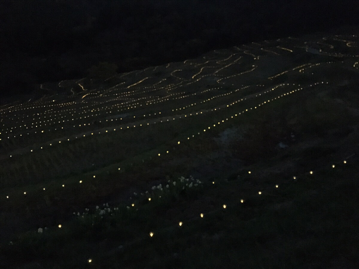 大山千枚田の日没後